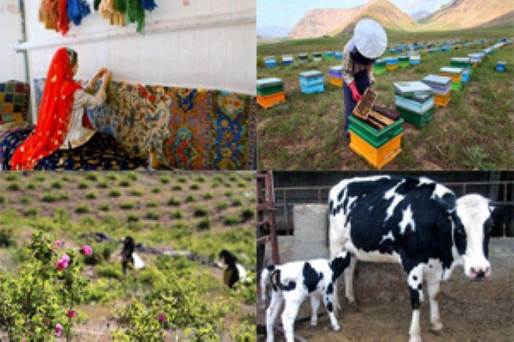جذب کردن 105 درصدی تسهیلات اشتغال روستایی در استان همدان